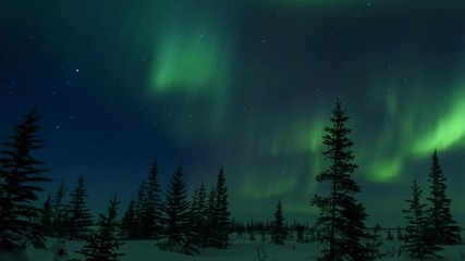 Fototapete - Aurora Borealis And Forest Time-Lapse