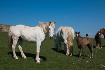 Cavalli al pascolo verde di montagna