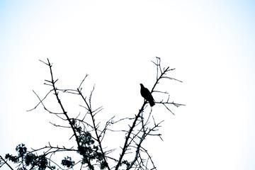 bird silhouette on the tree