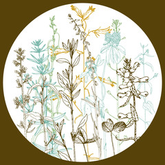 Round template with drawing herbs and flowers