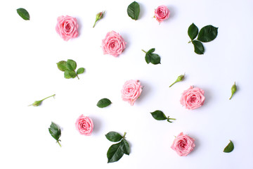 roses chaotically spread out on a white background with a shadow. a beautiful composition for the design in the style of minimalism. top.