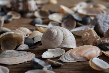 Mixed sea shels