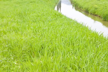 Rural landscape with ditch, green grass and water - image with copy space