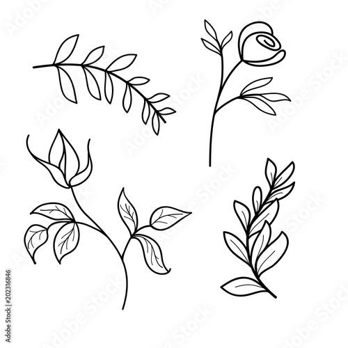 Outline of leaves, flowers of rose, vector illustration on