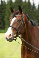 Amazing brown horse