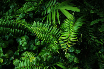 Tropical green leaf Wall mural