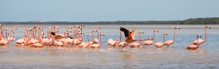 Foto op Canvas Flamingo Flamingos, Vögel, Celestun, Wasser, Celestún, Yucatan, Mexiko