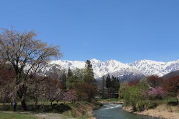 長野県白馬村 大出の吊り橋から北アルプス