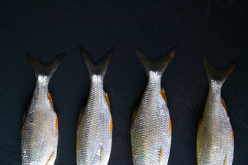 Roach fish or rutilus fish on black metal background with pieces of ice