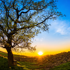 Wall Mural - Beautiful sunset in the countryside with oak and bench in the foreground