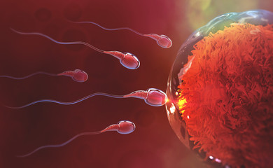 Sperm and egg cell. Natural fertilization. 3d illustration on red background