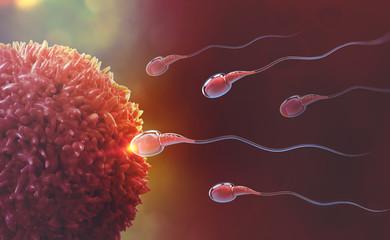 Sperm and egg cell. Natural fertilization. 3d illustration on red background
