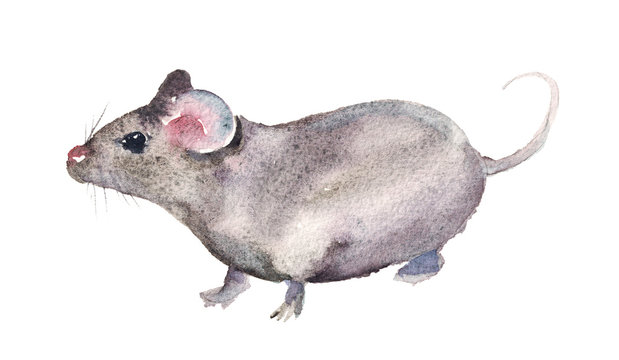 Watercolor hand drawn sketch illustration of Gray mouse isolated on white