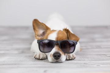 portrait of a young beautiful cute and small lying on a grey table and looking at the camera at home. He is wearing modern sunglasses and listening with a funny ear. LIfestyle and love concept