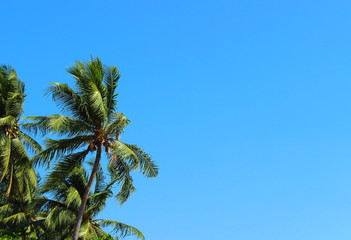 Tropical coconut palm trees on bright blue sky background in sunny day