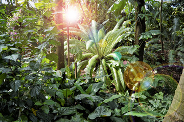 Jungle Sunset - Biodiversity and Rain Forests