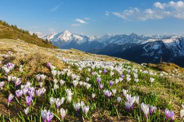 Fototapete - Frühling in den Alpen in Österreich