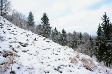 View from mountain top in winter with snow and stones. Misty forest