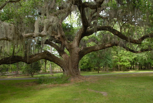 The Low Country, South Carolina