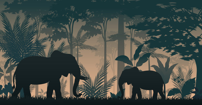 Animals silhouette at the inside forest