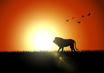 Silhouette lion in sunset at savanah