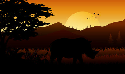 Silhouette of rhinos at savanah