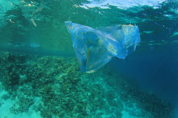 Plastic bag pollutes ocean coral reef
