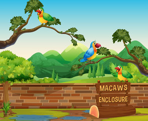 Happy Macaws in a Zoo