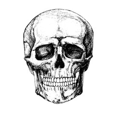 sketch skull vector
