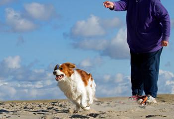 Dog sport on a beach