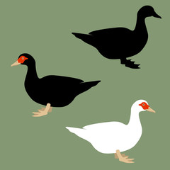 duck  vector illustration flat style   black silhouette