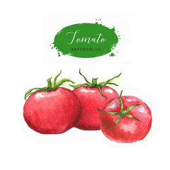 Hand-drawn watercolor food illustration. Red tomatoes isolated on the white background. Vegetarian food product