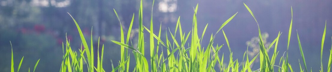 Banner of Wild meadow green grass background