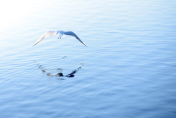 bird flies over water
