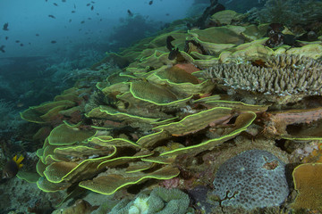 Marvelous colors and shapes of corals in the Ceram sea, Raja Ampat, West Papua, Indonesia