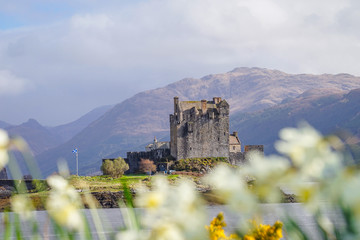 The Eilean Donan Castle with Flower Foreground, Highland, Scotland