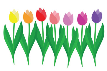 Set of colorful Tulips