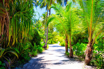 Walkway between palm trees on a Maldives island