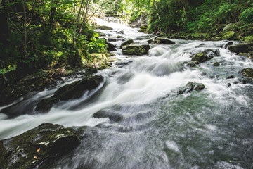 Printed kitchen splashbacks River Small river rushing through a green forest on a warm summer.s day