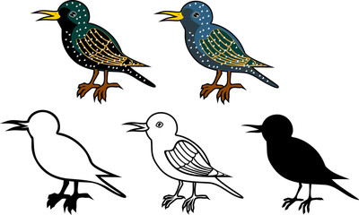 Set of different starlings on white background