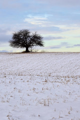 Tree Alone on a Hill