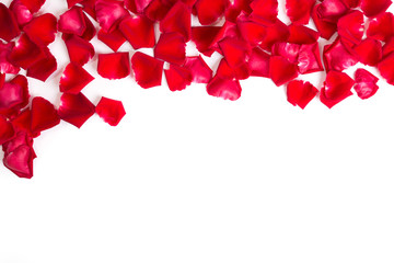Red rose petals on white background.Valentines day background.