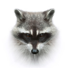 racoon head closeup isolated on white background