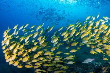 School of fish on a shipwreck