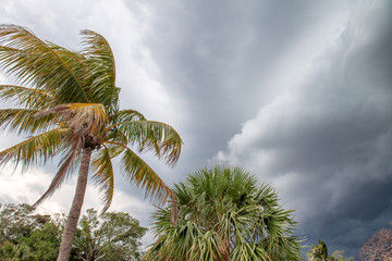 Palms waving in the wind on a stormy day