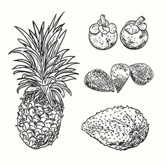 Tropical fruits sketch. Drawing fruits collection. Exotic natural healthy unique plants. Illustration of ananas, mangosteen, soursop of annona, salak.