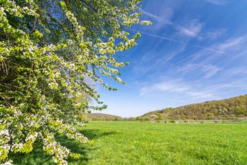 Landschaft Frühling Wiese Baum