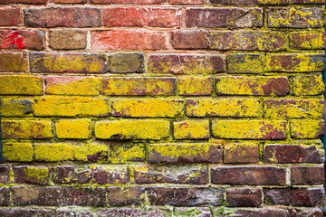 Old brick wall texture background half covered with lichen