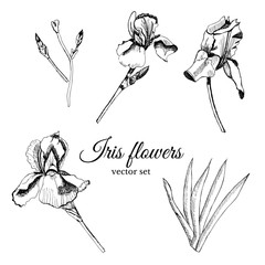Set with hand drawn graphic  sketch of summer flowers iris with leaves and bud.