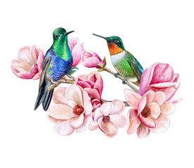 Hummingbirds sitting on a flowering branch of a magnolia. Exotic birds and spring flowering. watercolor. Illustration. Template.